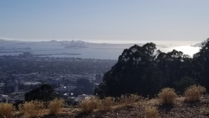 San Francisco: A View from Berkeley